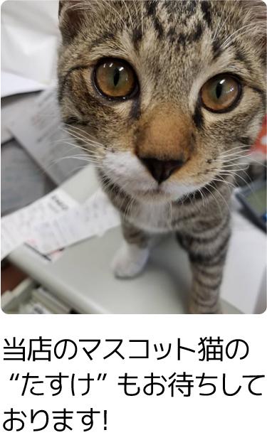 """当店のマスコット猫の """"たすけ"""" もお待ちしております!"""